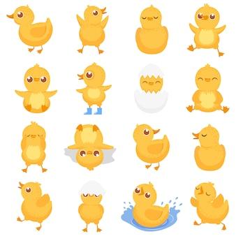 Żółte kaczątko, słodkie pisklę kaczki, małe kaczki i kaczuszka na białym tle kreskówka