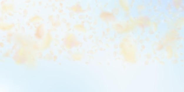Żółte, pomarańczowe płatki kwiatów spadają. zadziwiający romantyczny gradient kwiatów. latający płatek na tle błękitnego nieba. miłość, koncepcja romansu. dramatyczne zaproszenie na ślub.