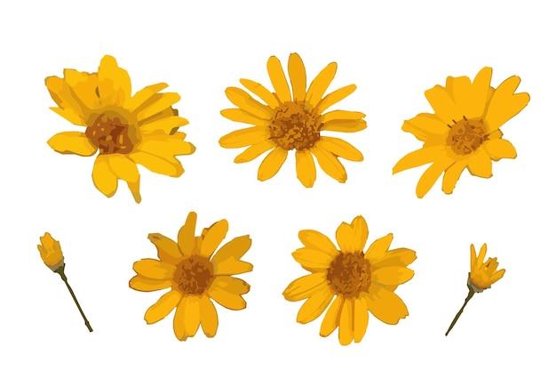 Żółte realistyczne abstrakcyjne kwiaty do wystroju elementy dekoracyjne ilustracja wektorowa
