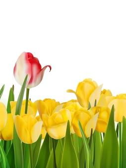 Żółte tulipany i jeden czerwony.