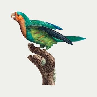 Żółty koronowany papuga długoogonowa