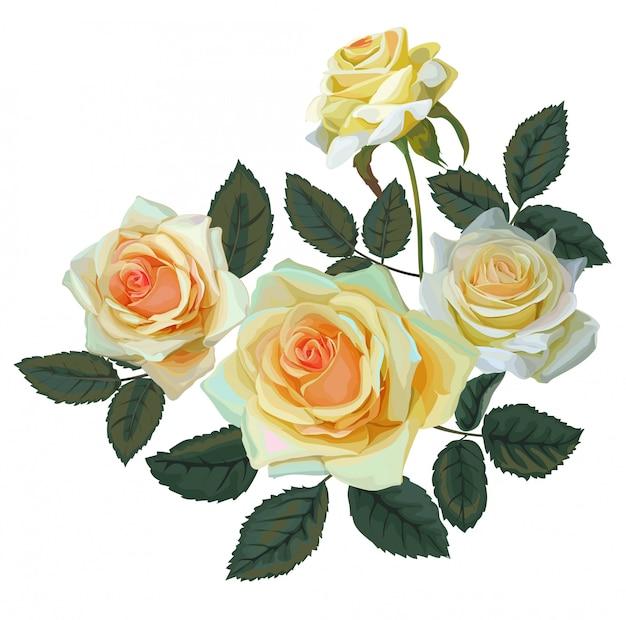 Żółty kwiat róży bukiet-wektor