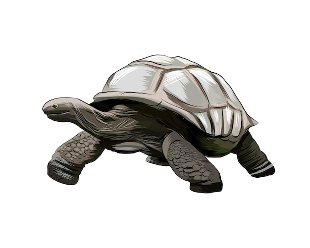 Żółw galapagos z odrobiny akwareli