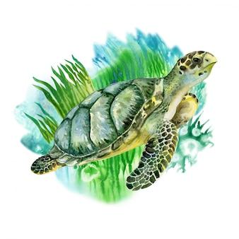 Żółw morski zielony z wodorostami. życie morskie. akwarela