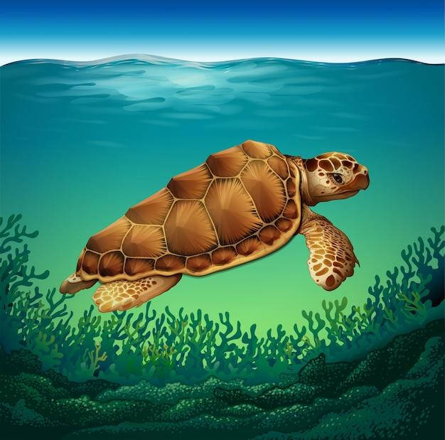 Żółw w morzu