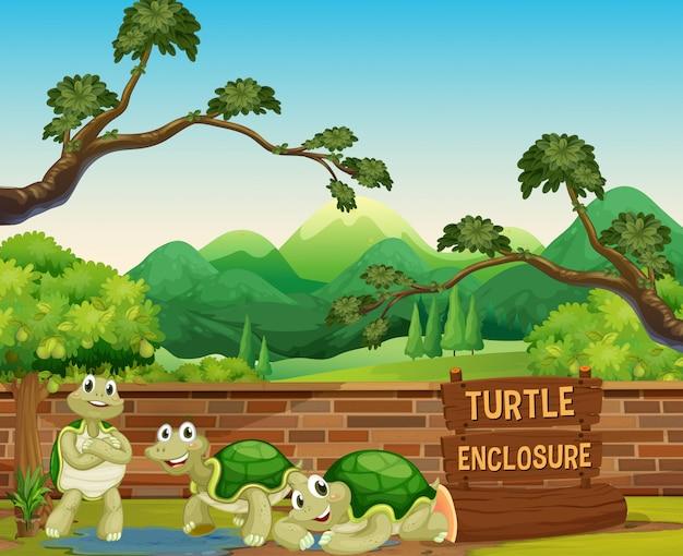Żółw w otwartym zoo