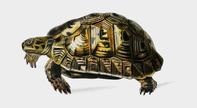 Żółw Darmowych Wektorów