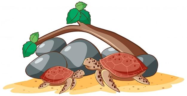 Żółwie morskie na białym tle
