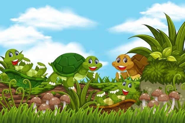 Żółwie w scenie dżungli