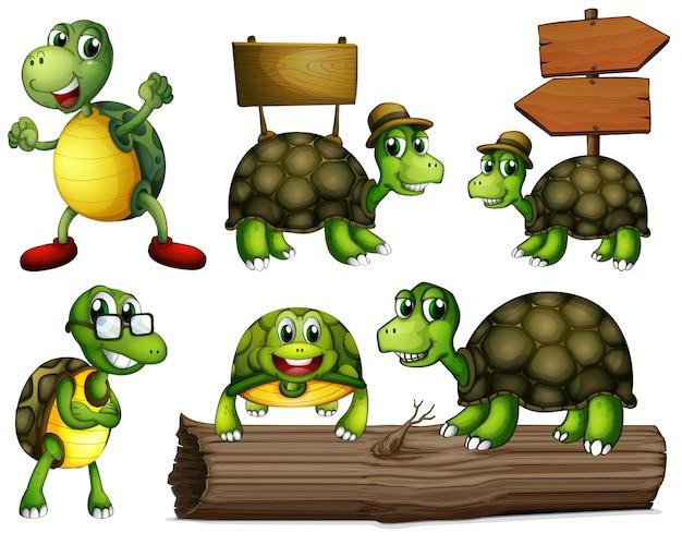 Żółwie z pustymi szyldami