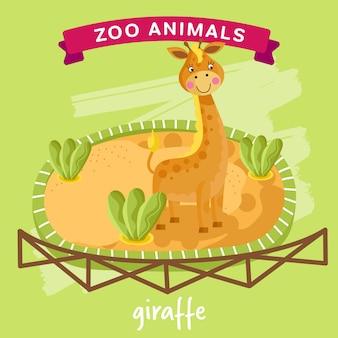 Zoo animal, giraffe