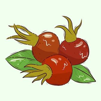 Źródło witaminy c. ilustracja wektorowa. jagody dzikiej róży. dojrzałe owoce dzikiej róży. kreskówka.