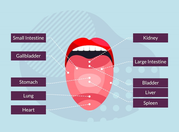 Związek części języka z narządami w organizmie człowieka - ilustracja infographic