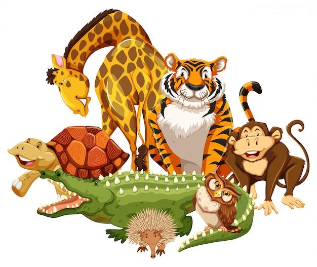 Zwierząt