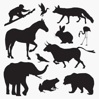 Zwierzęta 3 sylwetki