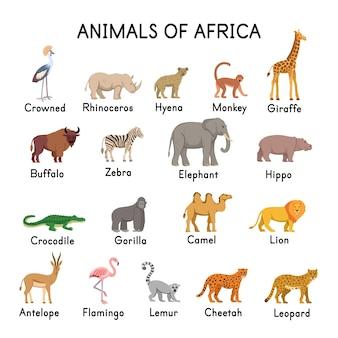 Zwierzęta afryki hiena żyrafa zebra słoń krokodyl goryl lew antylopa flaming lemur gepard lampart wielbłąd bawół hipopotam nosorożec koronowany żuraw na białym tle