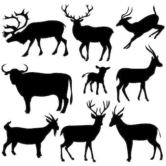 Zwierzęta, bydło