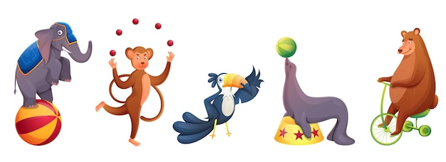 Zwierzęta cyrkowe występujące w różnych typach