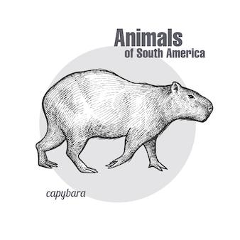 Zwierzęta kapibary ameryki południowej.