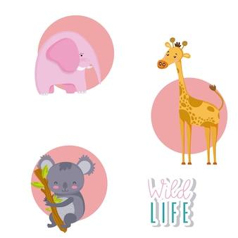 Zwierzęta ładny kreskówka okrągłe ikony