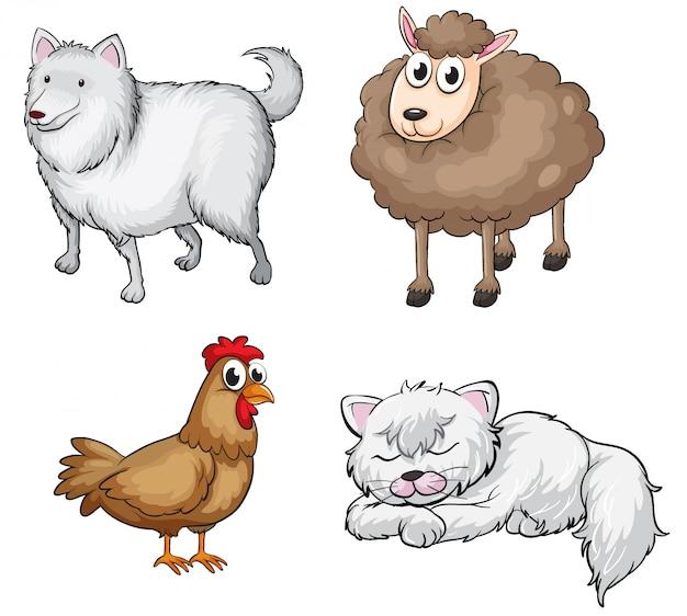Zwierzęta lądowe