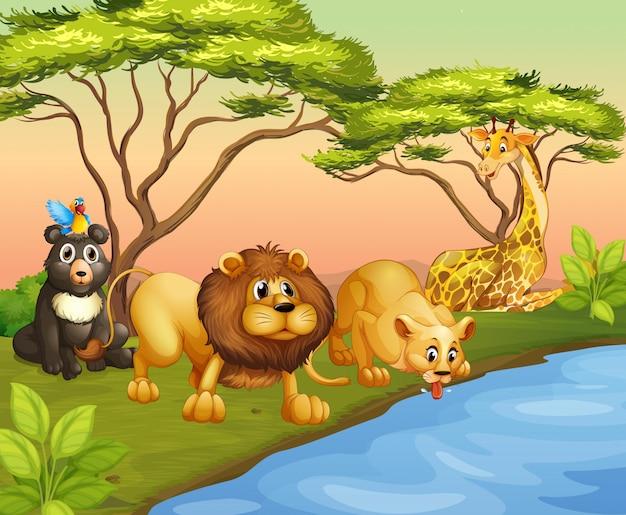 Zwierzęta pijące wodę z rzeki