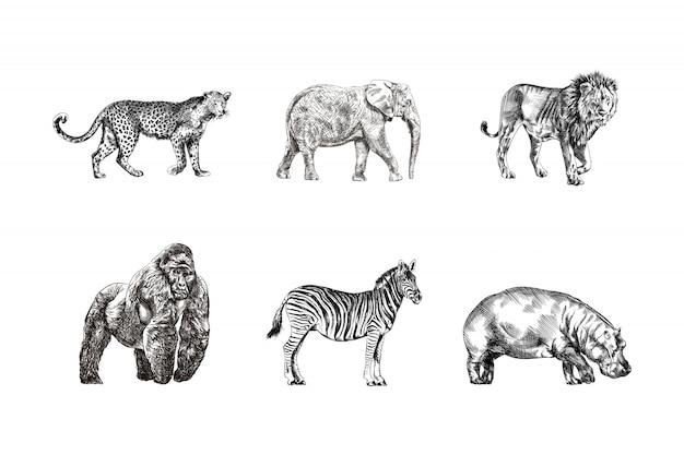 Zwierzęta sawanny ręcznie rysowane szkice lampart, koń, słoń, goryl, lew, hipopotam