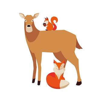 Zwierzęta z lisów i wiewiórek