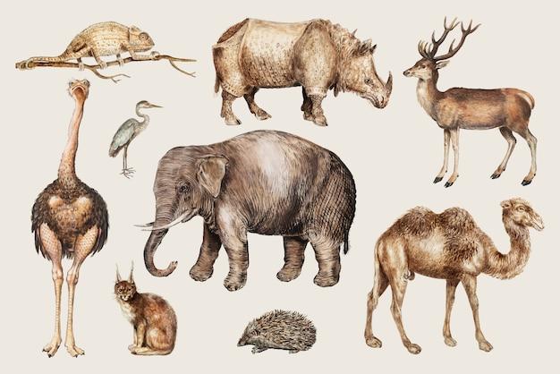 Zwierzęta z safari