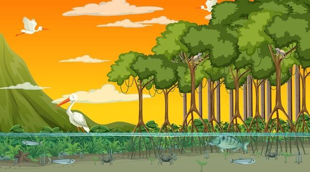 Zwierzęta żyją w lesie namorzynowym o zachodzie słońca