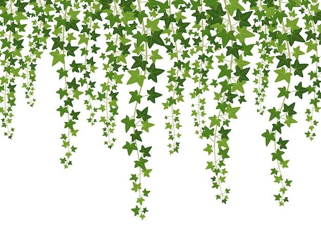 Zwisające z góry pnącza z liśćmi
