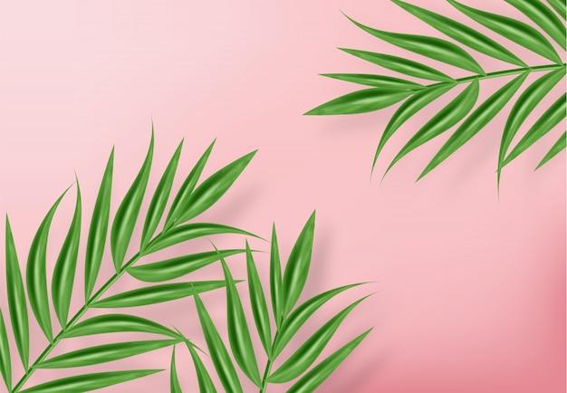 Zwrotnik palmy pozostawia tło
