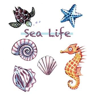Życie morskie / pod życiem morskim / słodkie zwierzęta morskie