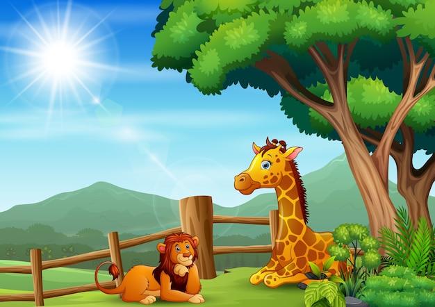 Żyrafa i lew siedzą i bawią się w zoo