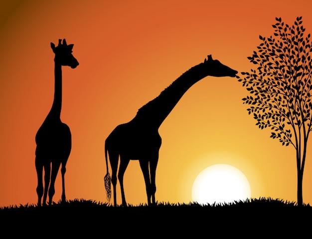 Żyrafy w afryce wektor tle