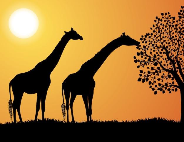 Żyrafy w afryka tle