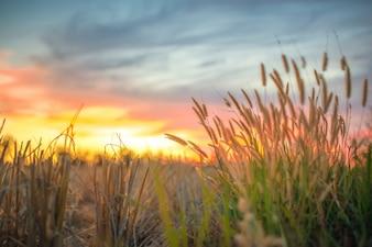 łąka i zachód słońca
