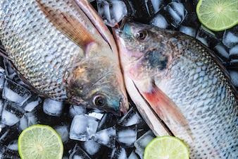 Świeża ryba tilapia na lodzie z cytryny pastą.