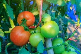 Wiersze Warzywa Wektory Zdjęcia I Pliki Psd Darmowe