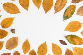 Żołądź wewnątrz granicy liścia