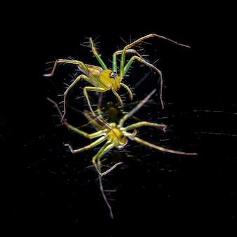 Żółty pająk na czarnej scenie