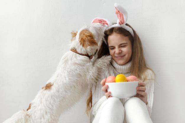 1 biała nastolatka 10 lat w białym swetrze i dżinsach, uszy królika, z różowymi i żółtymi pisankami w dłoniach na białej ścianie, pies liże dziecku buzię, bawi się