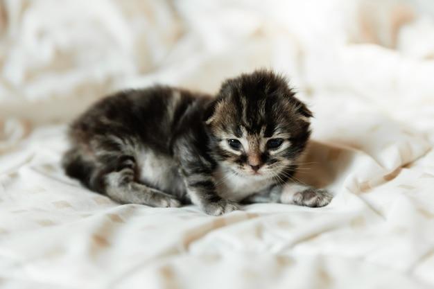 1 miesiąc czarny kociak na kocu.