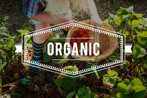 100% natura organiczne świeżo zbierane zdrowe jedzenie