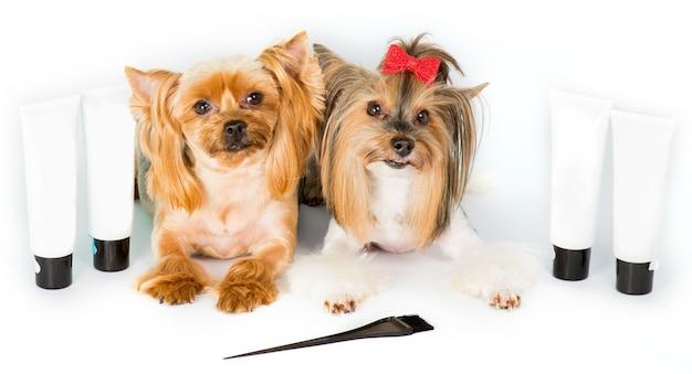 2 psy yorkshire terrier i butelki na kosmetyki dla psów, farbę, szampon