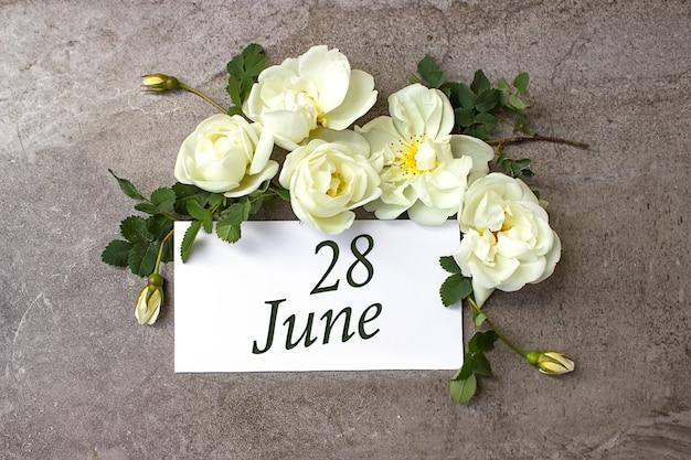 28 czerwca. 28 dzień miesiąca, data kalendarzowa. białe róże obramowania na pastelowym szarym tle z datą kalendarzową. miesiąc letni, koncepcja dnia roku.