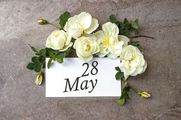 28 maja. 28 dzień miesiąca, data kalendarzowa. białe róże obramowania na pastelowym szarym tle z datą kalendarzową. miesiąc wiosny, koncepcja dnia roku.