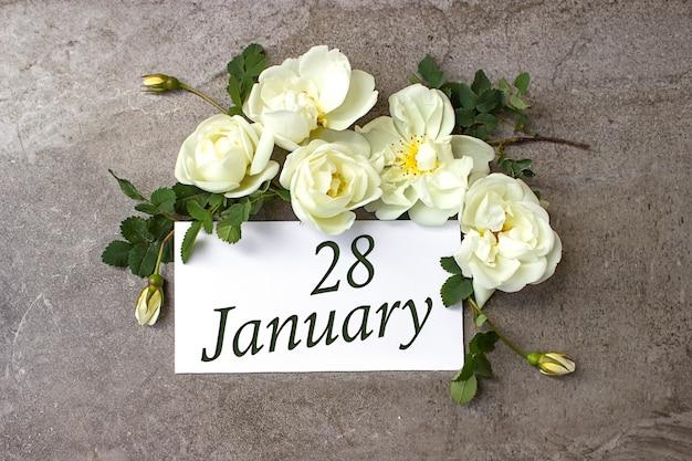 28 stycznia. 28 dzień miesiąca, data kalendarzowa. białe róże obramowania na pastelowym szarym tle z datą kalendarzową. miesiąc zimowy, koncepcja dnia roku.