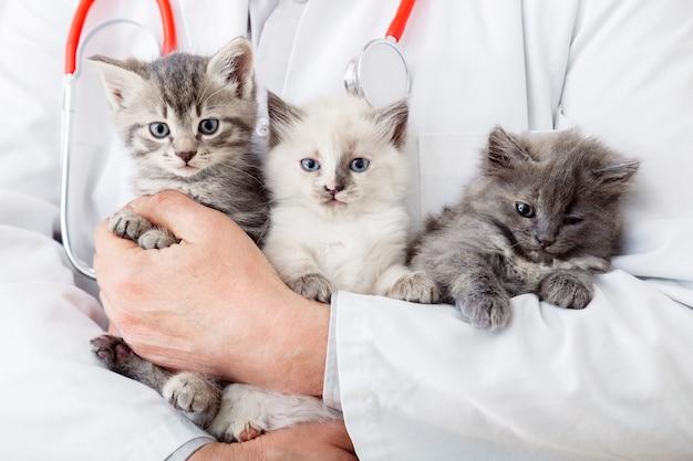 3 kocięta u weterynarza. lekarz ręce trzymając koty zwierząt ssaków w klinice weterynaryjnej. grupa rodzinna małe puszyste kocięta. mężczyzna weterynarz lekarz posiadający wiele kociąt kotów do sprawdzenia zdrowia, zwierząt domowych sprawdzić.