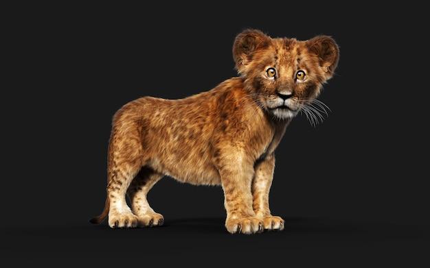3d ilustracja portret małego lwiątko na białym tle na ciemnym tle ze ścieżką przycinającą.